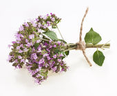 Oregano or Marjoram Herb Blooming — Stock Photo