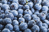 Blueberries with water drops — Stock Photo