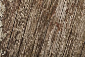 Old ancient wood texture — Stock Photo