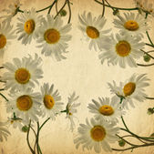Old card with a place for your text with daisies — Stock Photo