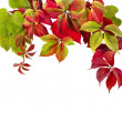 Autumn border frame of colored falling leaves on white — Stock Photo #14931707