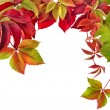Autumn border frame of colored falling leaves on white — Stock Photo