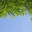 The blue sky against the backdrop of bamboo leaves — Stock Photo #14936601