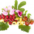 Rose hips, hawthorn, apple rennet - Stock Photo