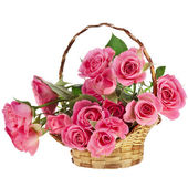 Bouquet pink roses in a basket isolated on white background — Stock Photo