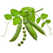 Fresh green pea in the pod isolated on white background — Stockfoto