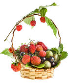 Ripe berries in the wicker basket isolated — Stock Photo