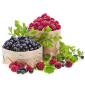 Fresh forest berries — Stock Photo