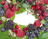 Colorful border frame made of sweet forest berries with blossom isolated on a white background — Stock Photo