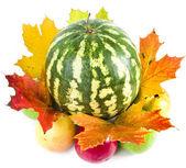 Anguria e mele con foglie di autunno — Foto Stock