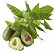 Avocado fruits with young leaves from Avocado tree, isolated on white — Stock Photo