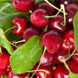 Cherry fruit isolated - Stock Photo