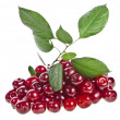 Sweet cherry isolated on a white background - Stock Photo