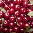 Cherry background — Stock Photo #15411487