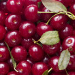 Stock Photo: Cherry background