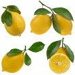 Lemon on a white background — Stock Photo