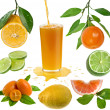 Collection fresh citrus isolated on the white background — Stock Photo