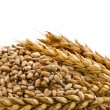 Pile of Wheat with Ears - Stock Photo