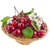 Cherries in a basket isolated on white — Stock Photo