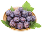 Fresh plums in bowl — Stock Photo