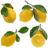 Lemon on a white background — Stock Photo