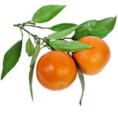 Ripe tangerines with leaves isolated on white — Stock Photo