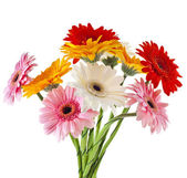 Daisy flower gerbera bouquet isolated on white background — Stock Photo