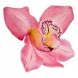 Pink Orchid flower on white background — Stock Photo #15804495