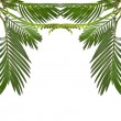 Border of leaves palm tree on white background — Stock Photo #15805727