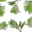 Leaves of palm tree on white background - Stockfoto