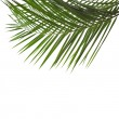 Palm leaves isolated on white — Stock Photo