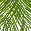 Palm leaves detail texture background — Stock Photo