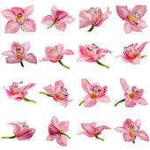 Beautiful pink Orchid flower on white background — Stock Photo