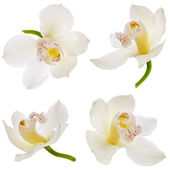 White orchid on white — Foto Stock