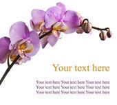 Roze orchid kaart op een witte achtergrond — Stockfoto