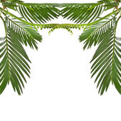 Border of leaves palm tree on white background — Stock Photo