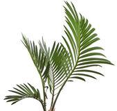 棕榈叶上白色隔离 — 图库照片
