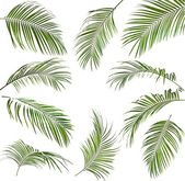 Palm leaves isolated on white — Стоковое фото