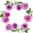 Beautiful roses frame on a white background — Stock Photo