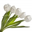 Bouquet of white tulips on white background — Stock Photo #15838221