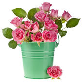 Bouquet pink roses in a green bucket isolated on white — Stock Photo