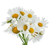 Chamomile flower bouquet isolated on white — Stock Photo