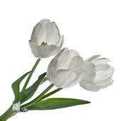 Bukiet białych tulipanów na białym tle — Zdjęcie stockowe