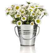 Bouquet of daisy flowers in a bucket in white background — Stock Photo