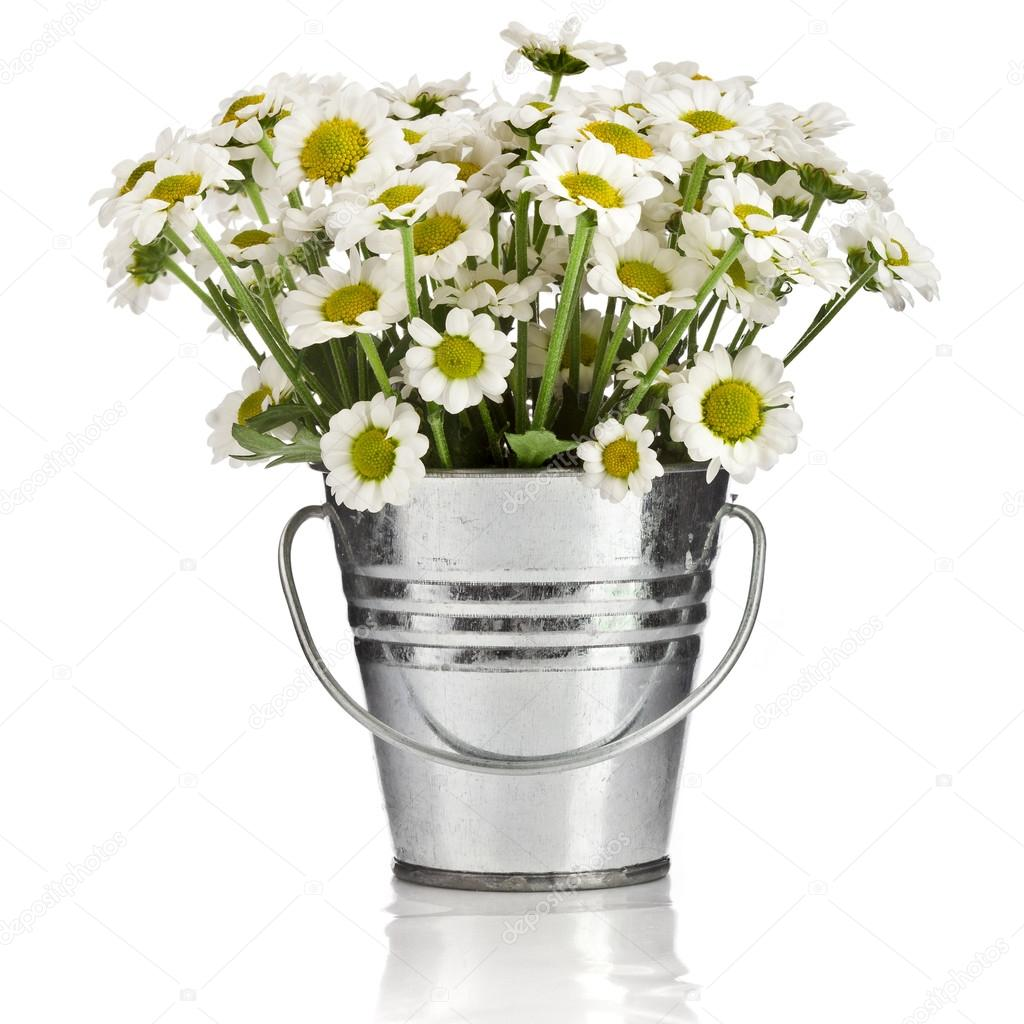 Bouquet of daisy flowers in a bucket in white background for Bucket of flowers papercrafting