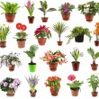 Collection of flower houseplants in flower pot, isolated on white background - 图库照片