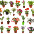 Stock Photo: Collection of flower houseplants in flower pot, isolated on white background