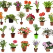Collection of flower houseplants in flower pot, isolated on white background - Stock Photo