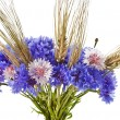 Bouquet of cornflower centaurea and wheat ears isolated on a white — Stock Photo #15841959