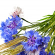 Bouquet of cornflower centaurea and wheat ears isolated on a white — Stock Photo #15841997